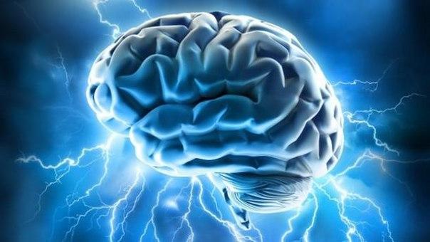 Повышенные уровни глутамата и серотонина могут привести к интенсивной агрессии