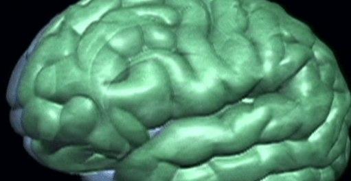 Ученые выяснили часть мозга, которая вычисляет намерения других