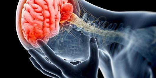 Ученые определили нейронный механизм, который отвечает за хронические боли