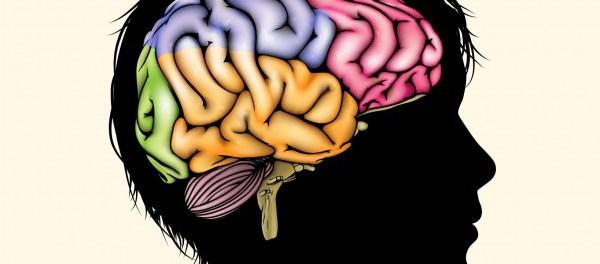 Размер мозга детей зависит от социально-экономического состояния их семьи