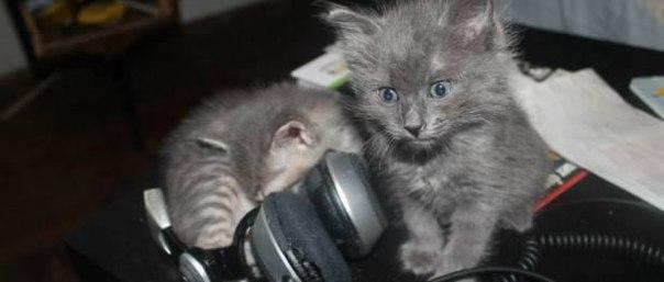 Классическая музыка помогает кошкам во время операции