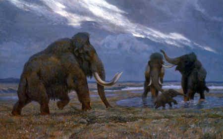 Ученые приблизились на шаг к тайне вымирания мамонтов