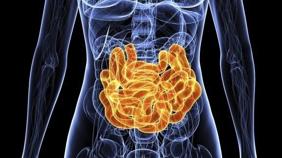 Ограничение калорий изменяет микрофлору