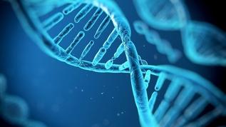 Генная инженерия: что может ждать нас в будущем?