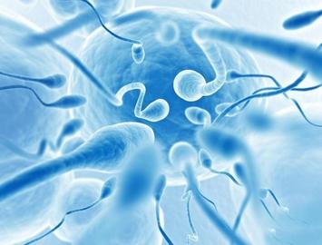 Синтезирована искусственная сперма