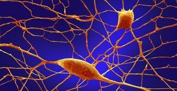 Клетки кожи объяснят аутизм