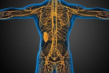 Лимфатическая система мозга